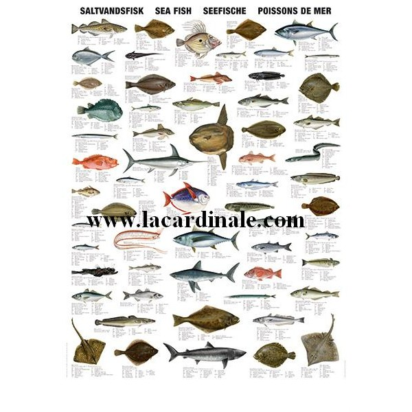 Poster poissons de mer sea fish librairie maritime la for Bassin a poison