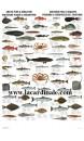 Poster Poisson et Crustacé de l'articque - Arctic Fish & Shellfish