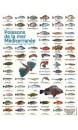 Poster planche de 65 photos poissons de la mer méditerranée