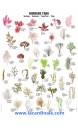 Poster Algues, Seaweed
